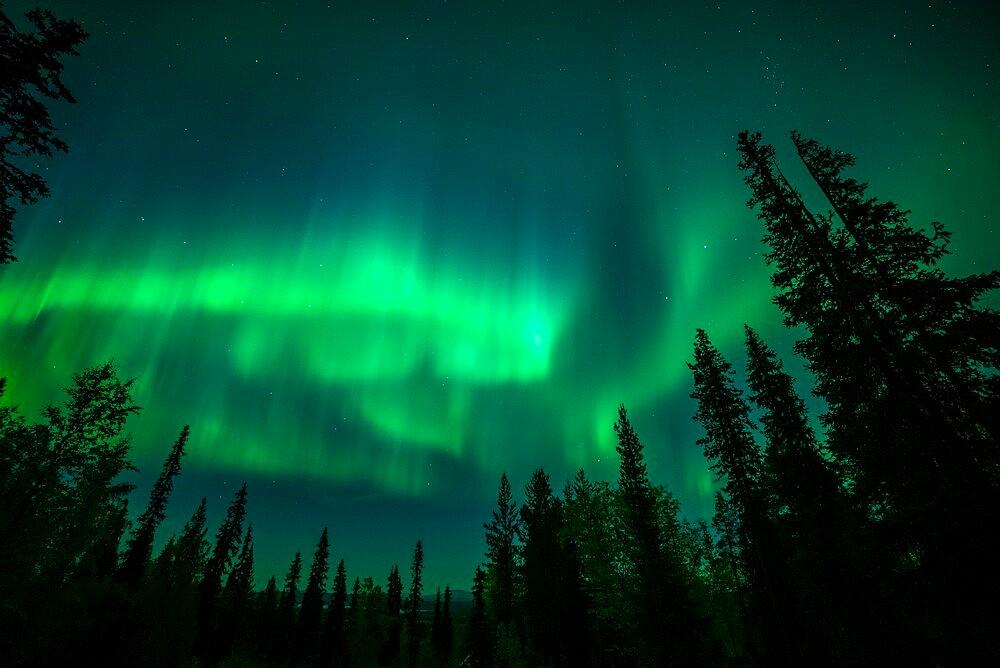 Aurora borealis over coniferous forest, Muonio, Lapland, Finland, September. - 1200-369