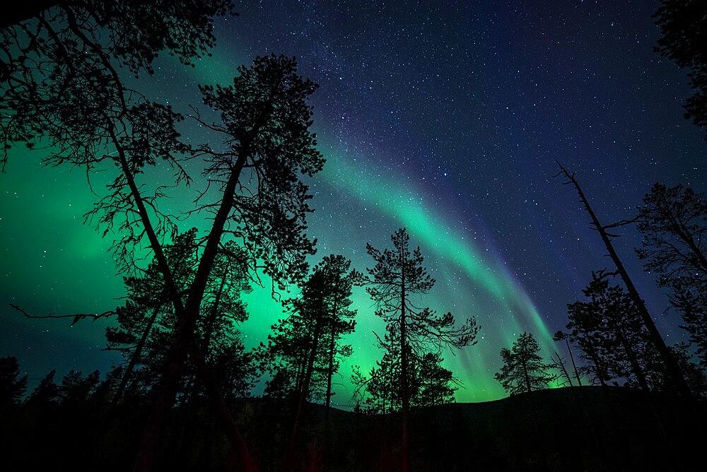 Aurora borealis over coniferous forest, Muonio, Lapland, Finland, September. - 1200-372