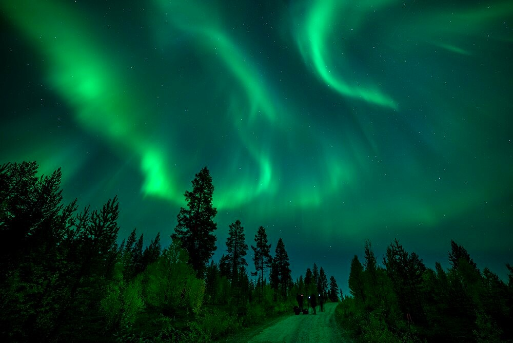 Photographers taking pictures of aurora borealis over coniferous forest, Muonio, Lapland, Finland, September. - 1200-374