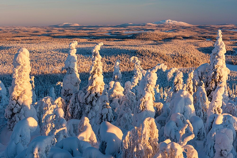 Snow covered winter landscape, tykky, looking towards Russia from Kuntivaara Fell, Kuusamo, Finland. - 1200-389