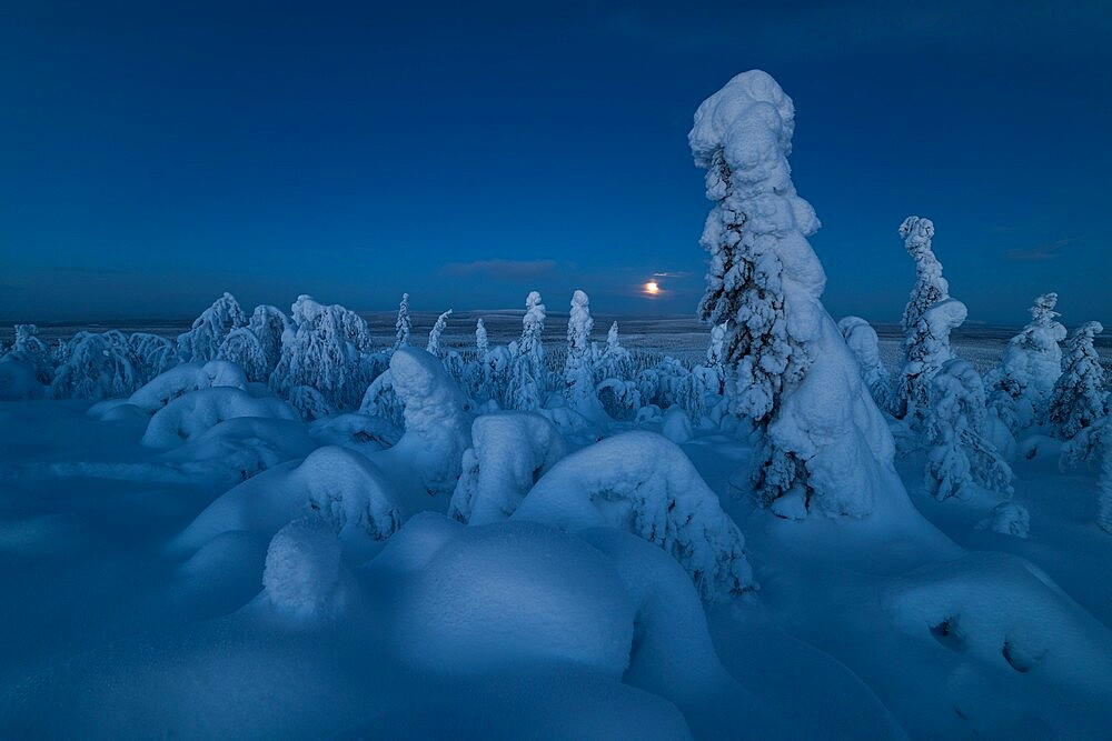 Full moon rising over a snow covered winter landscape, tykky, looking across Russia from Kuntivaara Fell, Kuusamo, Finland. - 1200-392