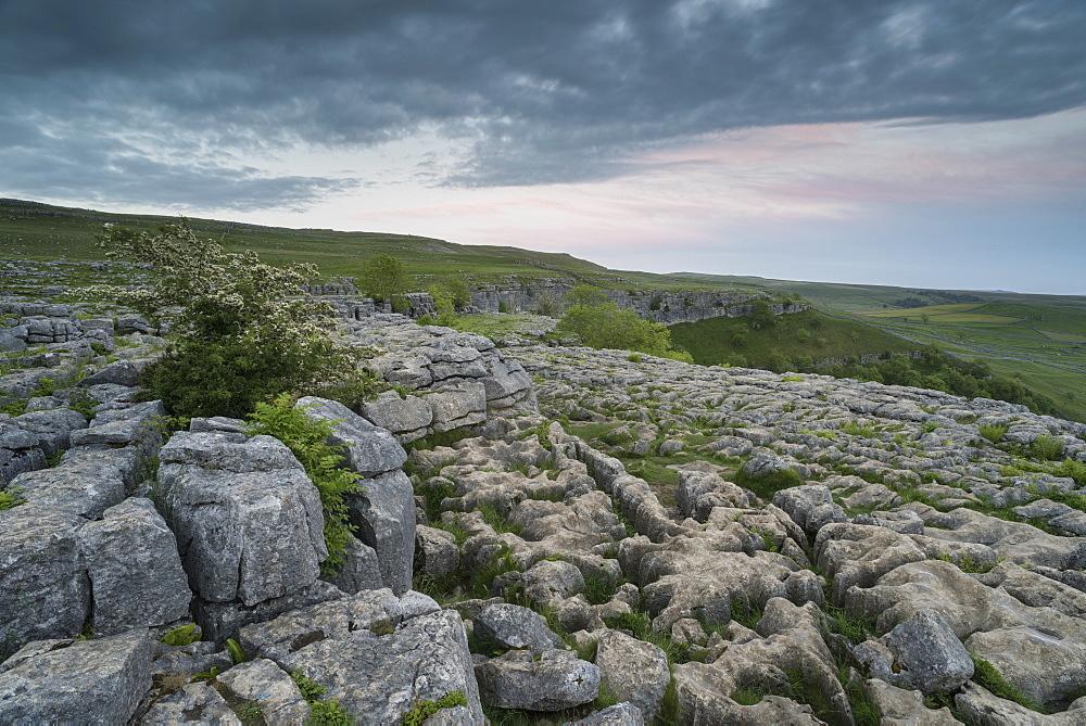 View of limestone pavement, Malham Cove, Malham, Yorkshire Dales National Park, North Yorkshire, England, United Kingdom, Europe - 1200-77