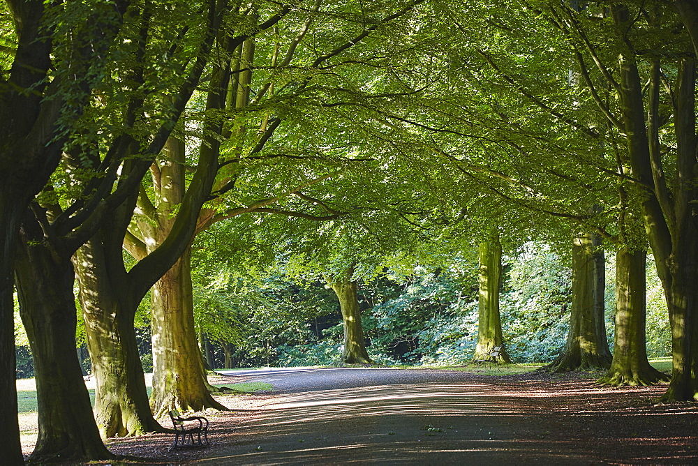 A tree-lined avenue in Clifton, Bristol, England, United Kingdom, Europe