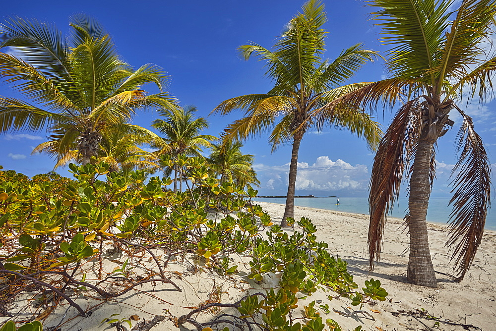 Vegetation along Long Bay Beach, on the south coast of Providenciales, Turks and Caicos, West Indies, Central America
