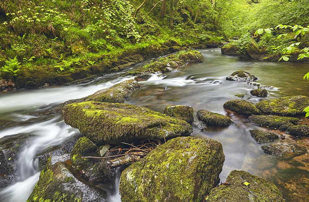 The East Lyn River flowing through ancient woodland at Watersmeet, near Lynmouth, in Exmoor National Park, Devon, Great Britain.