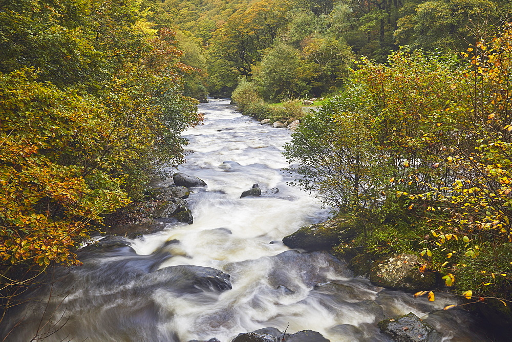 A view of a moorland river surrounded by autumnal ancient forest, the East Lyn River, at Watersmeet, Exmoor National Park, Devon, England, United Kingdom, Europe