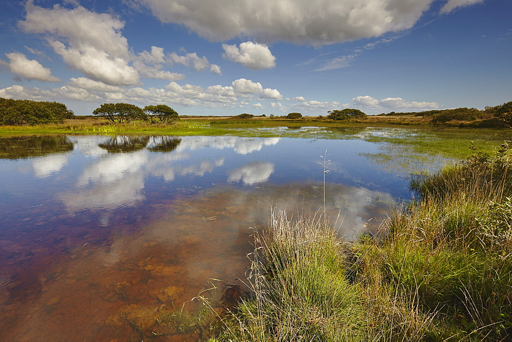 Croft Pascoe Pool, on Goonhilly Down, an important protected area for biodiversity, on the Lizard peninsula, in west Cornwall, England, United Kingdom, Europe - 1202-307