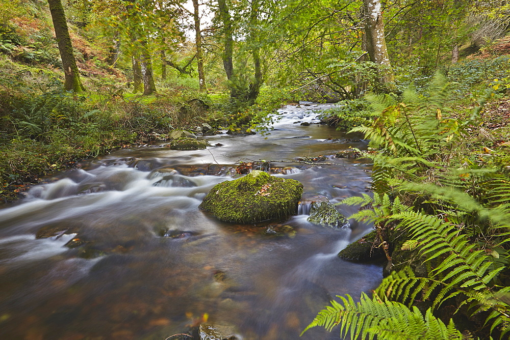 Horner Wood and Horner Water, at Pool Bridge, near Porlock, in Exmoor National Park, Somerset, Great Britain.