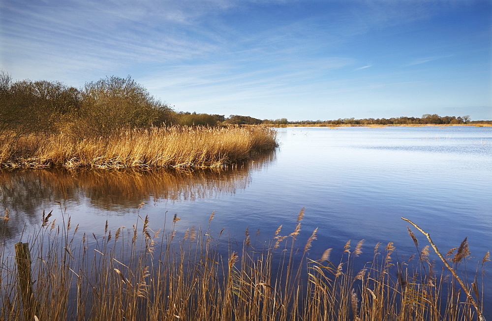 A wintery view of marshland, in Shapwick Heath Nature Reserve, one of the Avalon Marshes, near Glastonbury, Somerset.