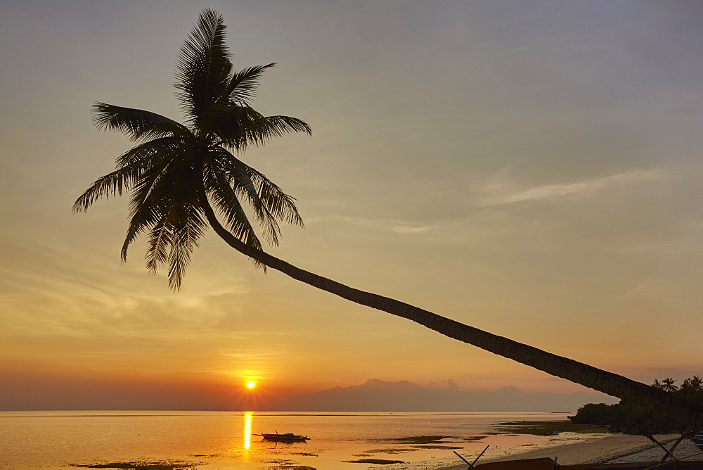A sunset silhouette of a coconut palm at Paliton beach, Siquijor, Philippines, Southeast Asia, Asia