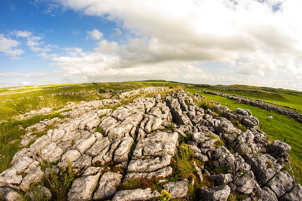 Above Malham, Yorkshire Dales, UK. Trees. Limestone Pavement.