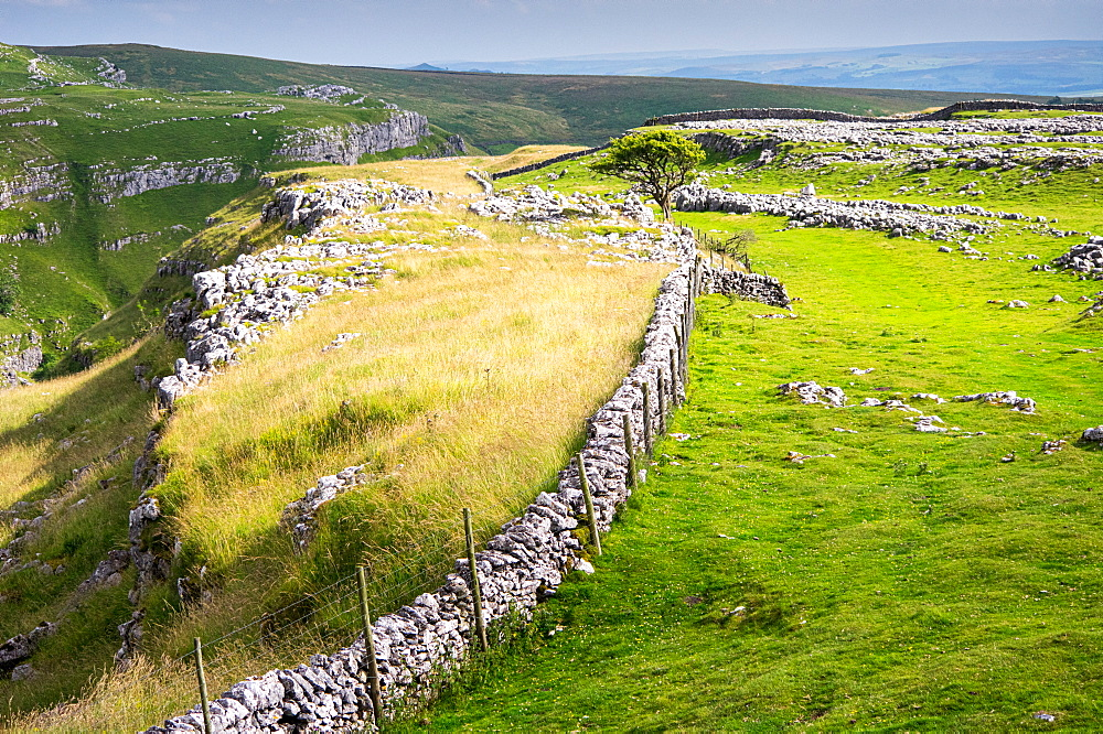 Above Malham, Yorkshire Dales, UK. Trees. - 1209-270