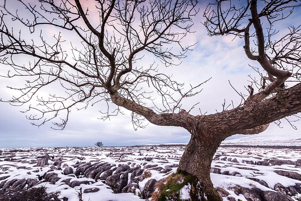 Twistleton Scar End in snow, Ingleton, Yorkshire Dales, Yorkshire, England, United Kingdom, Europe - 1209-77