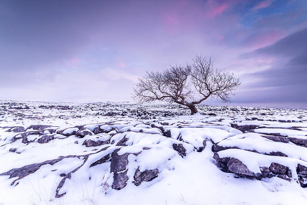 Twistleton Scar End in snow, Ingleton, Yorkshire Dales, Yorkshire, England, United Kingdom, Europe - 1209-78