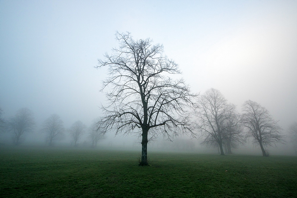 Misty dawn, Victoria Park, Bristol, England, United Kingdom, Europe - 1209-79