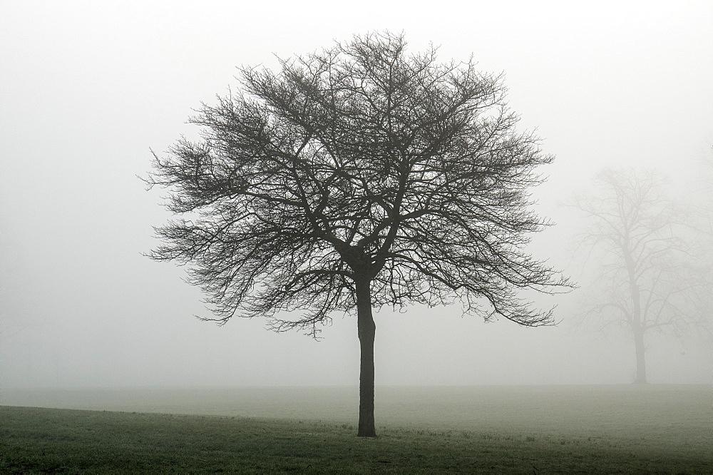 Misty dawn, Victoria Park, Bristol, England, United Kingdom, Europe - 1209-80