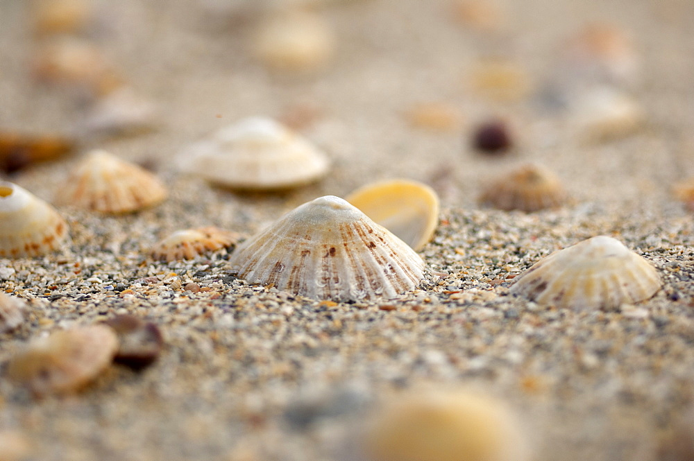 Sea shells on the sand, United Kingdom, Europe