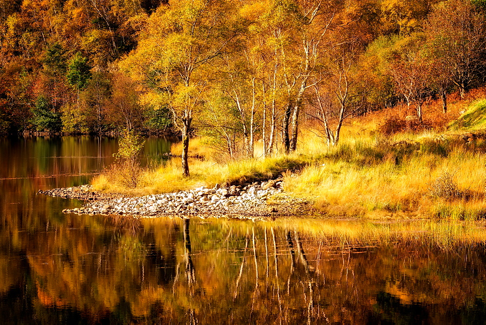 Autumn in the Scottish Highlands, Scotland, United Kingdom, Europe - 1216-116