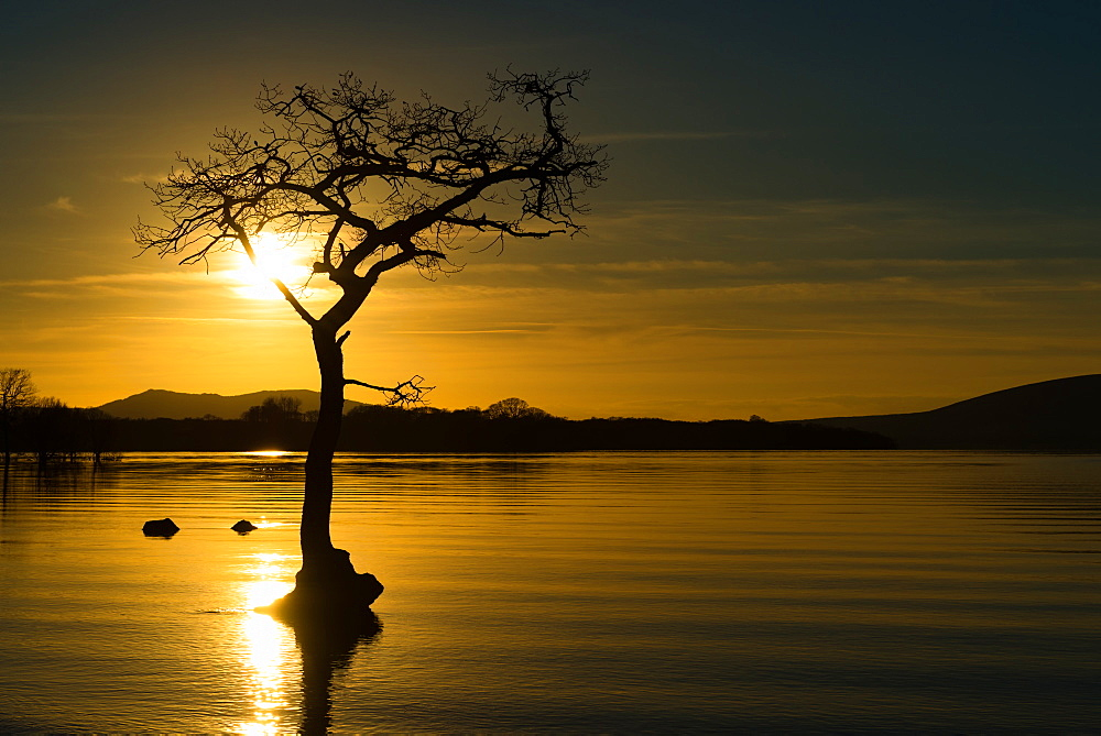 Tree submerged in Loch Lomond at sunset, Scotland, United Kingdom, Europe - 1216-239