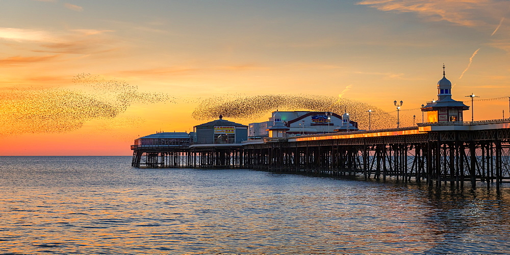 Starling murmuration, Blackpool Pier at sunset, Lancashire, England, United Kingdom, Europe