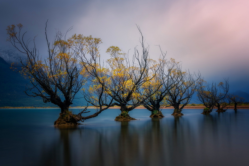 Glenorchy willow trees in autumn, Glenorchy, South Island, New Zealand, Pacific - 1216-324
