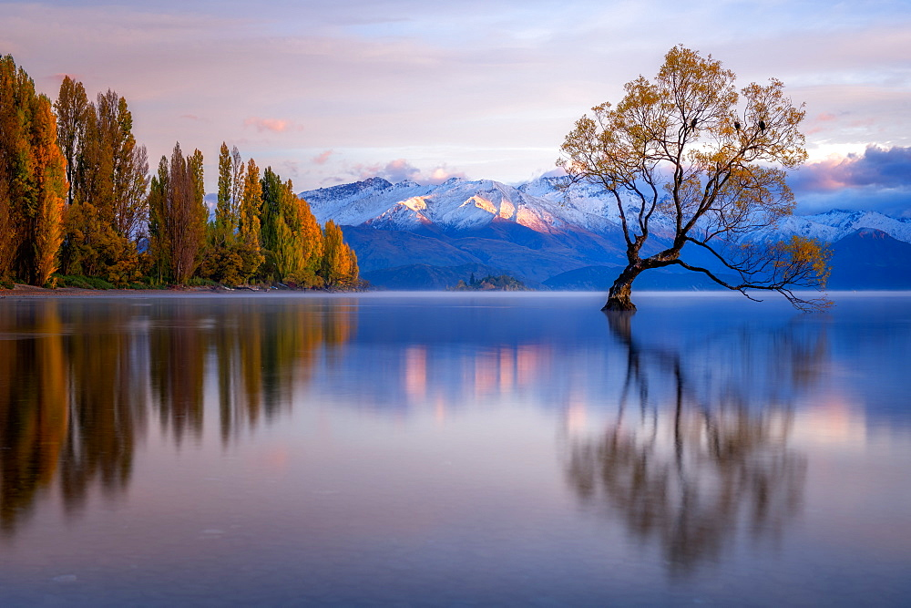 Wanaka Tree, Lake Wanaka with the snow capped peaks of Mount Aspiring National Park, Otago, South Island, New Zealand, Pacific - 1216-491