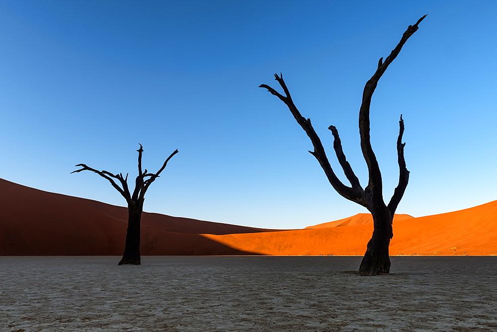 Deadvlei, Namibia, Africa - 1216-91
