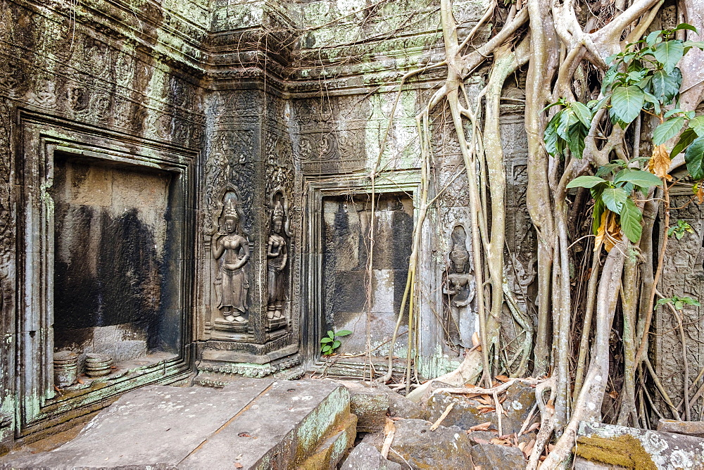 Tree roots growing on Ta Prohm temple (Rajavihara) ruins, Angkor, UNESCO World Heritage Site, Siem Reap Province, Cambodia, Indochina, Southeast Asia, Asia