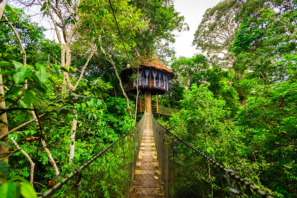 One of the tree house's at the Tree House Lodge in the Amazon Jungle.