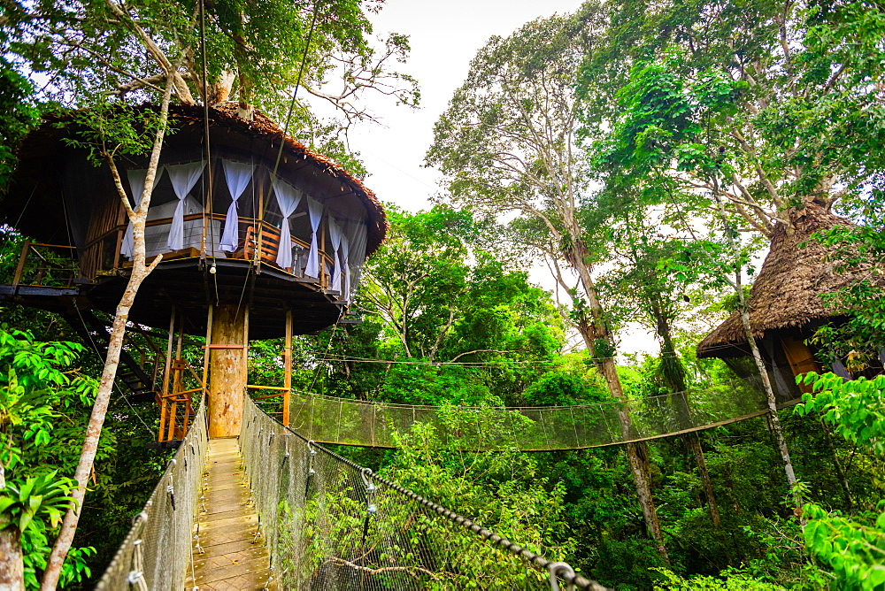 One of the tree houses at the Tree House Lodge in the Amazon Jungle, Peru, South America