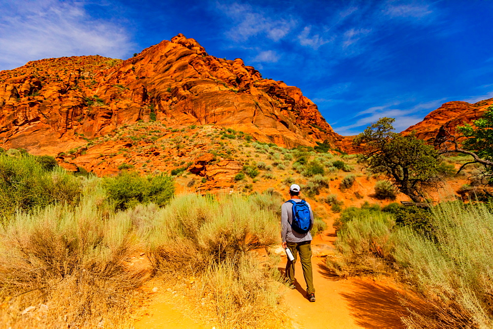 Man hiking along the Red Reef Trail, Red Cliffs National Conservation Area, Utah, United States of America, North America - 1218-1309
