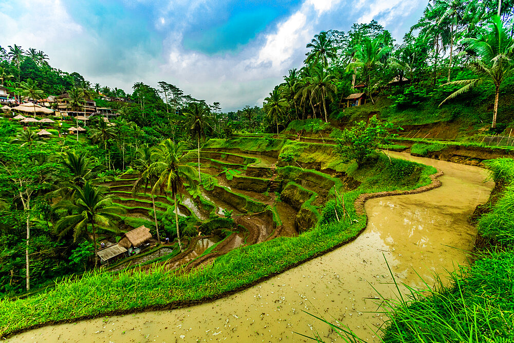 Tegallalang Rice Terrace in Bali, Indonesia, Southeast Asia, Asia - 1218-603