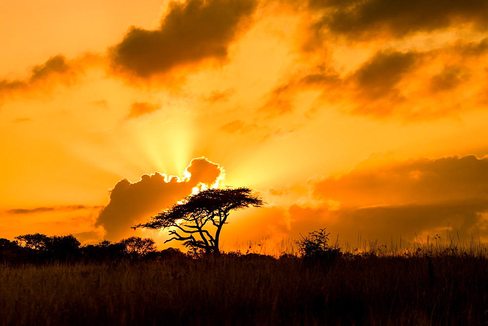 Sunset, Zululand, South Africa, Africa - 1218-724