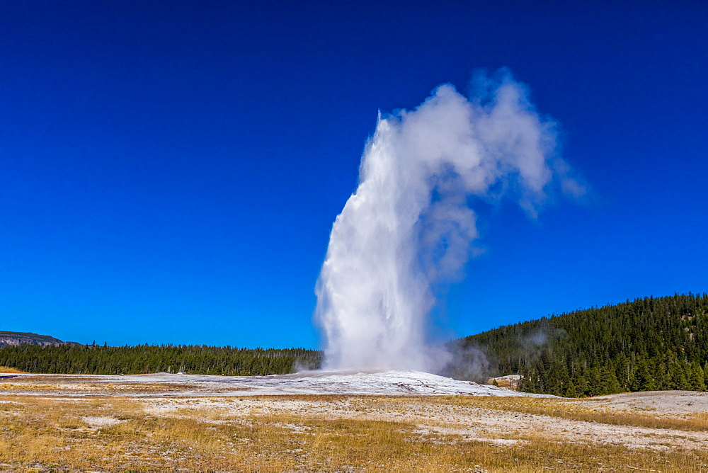 Old Faithful, a cone geyser, Yellowstone National Park, UNESCO World Heritage Site, Wyoming, United States of America, North America