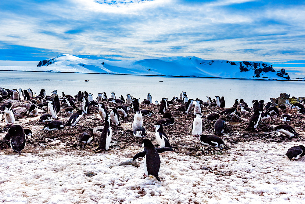 Scenic view of Chin Strap Penguins and glaciers in Antartica. - 1218-791