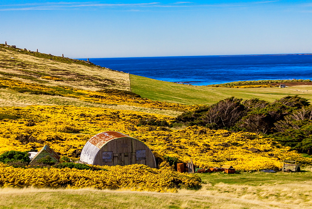 Scenic view on New Island, Falkland Islands, South America