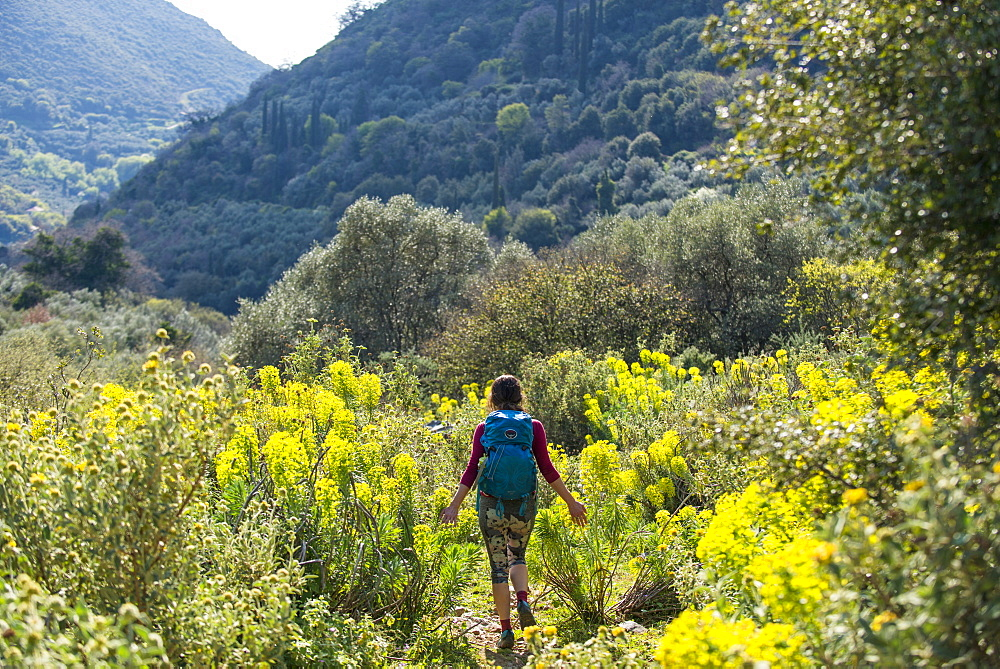 A woman hiking a trail full of abundant wild flowers on the Mani Peninsula in the Peloponnese, Greece, Europe