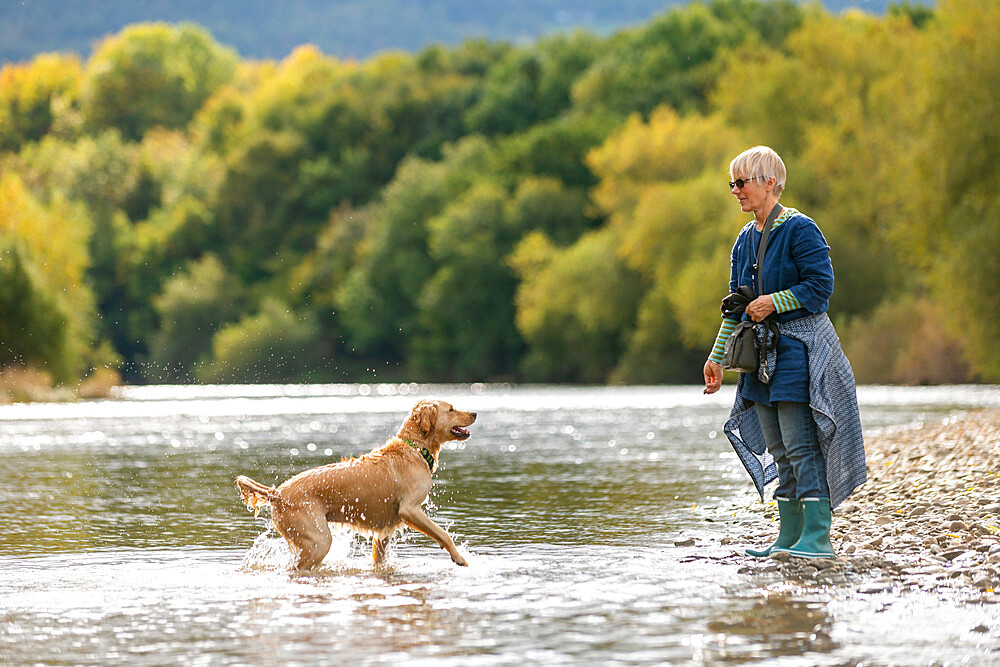 A woman plays with her Golden Retrievr dog in the Wye river on a sunny day - 1225-1313