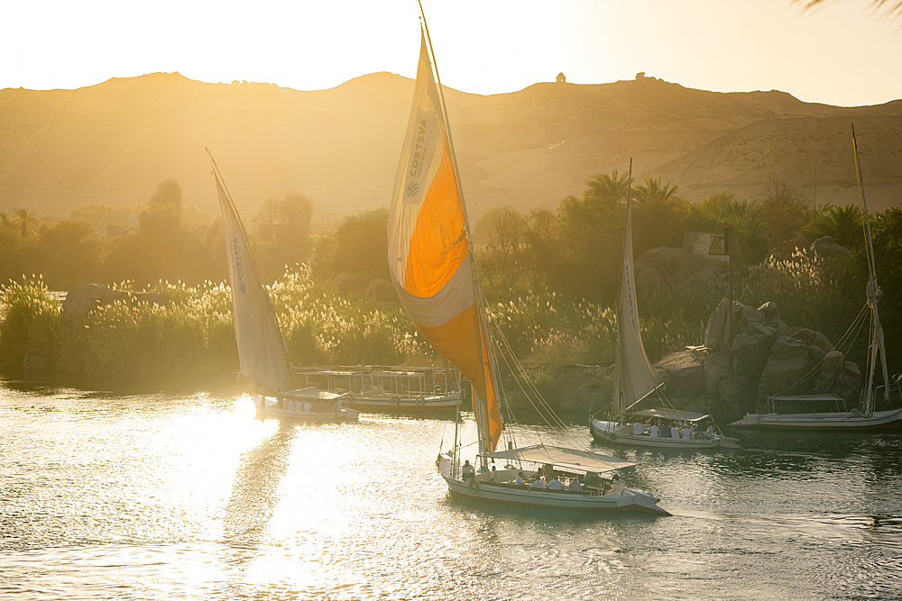 Traditional Felucca sailboats with wooden masts and cotton sails on the River Nile, Aswan, Egypt, North Africa, Africa - 1225-1366