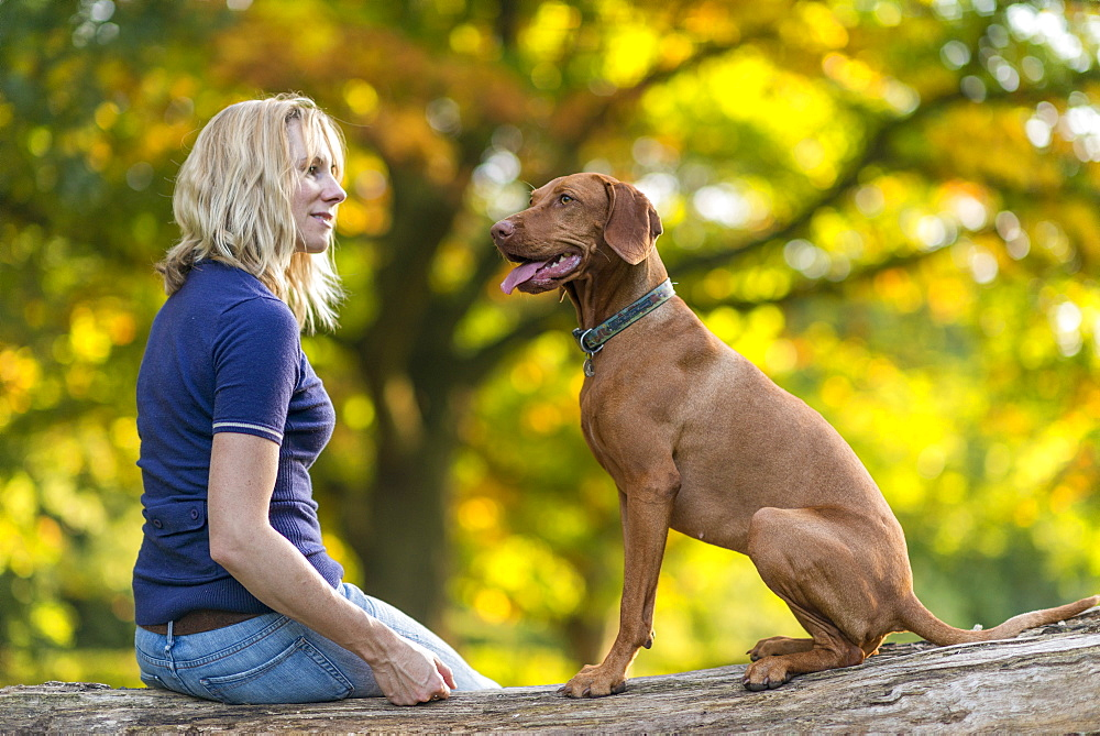 A woman takes her Vizsla for a walk on Wimbledon Common in London, England, United Kingdom, Europe