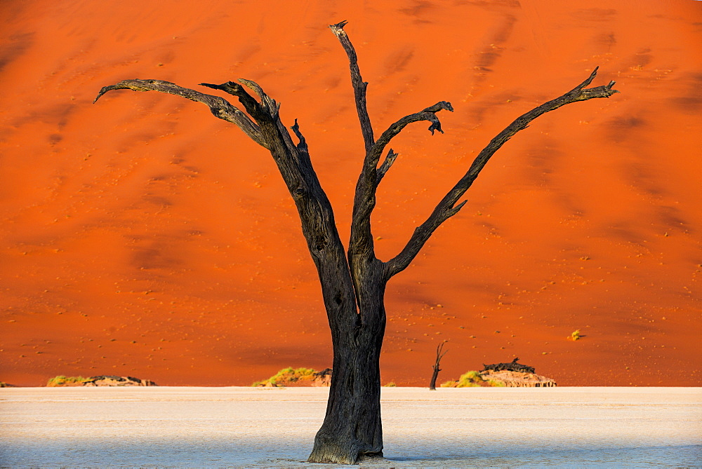 Dead acacia tree silhouetted against sand dunes at Deadvlei, Namib-Naukluft Park, Namibia, Africa