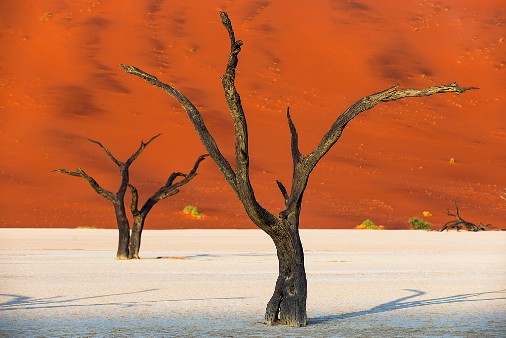 Dead acacia trees silhouetted against sand dunes at Deadvlei, Namib-Naukluft Park, Namibia, Africa