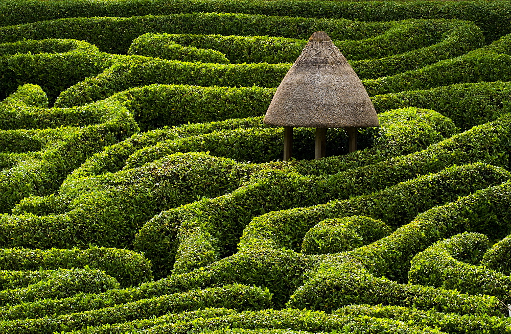 A maze in Glendurgan Garden on the Lizard peninsula in Cornwall, England, United Kingdom, Europe