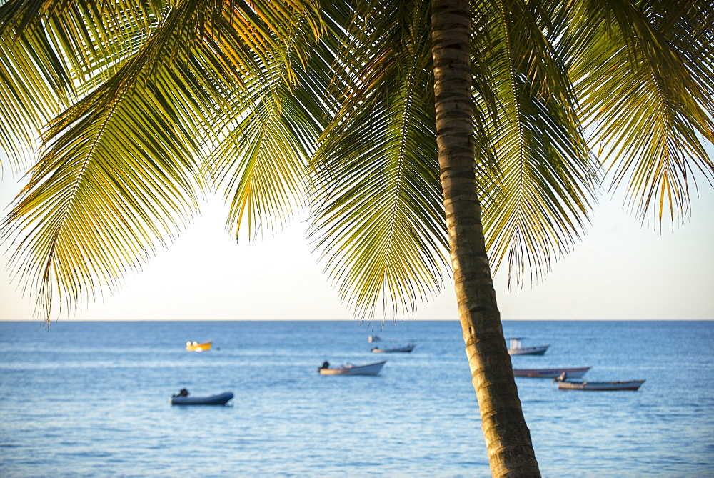 A view out to sea at sunset beneath the palm trees at Castara Bay in Tobago