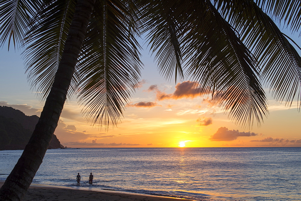 A view out to sea at sunset beneath the palm trees at Castara Bay in Tobago, Trinidad and Tobago, West Indies, Caribbean, Central America - 1225-356