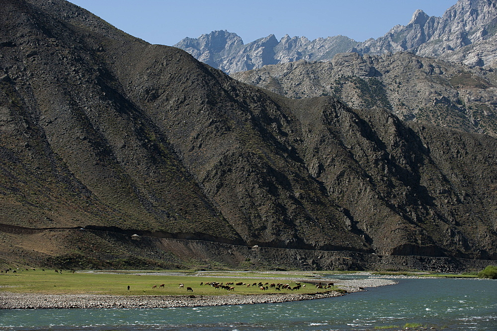 Goats graze along the riverbank of the Panjshir River in Afghanistan, Asia