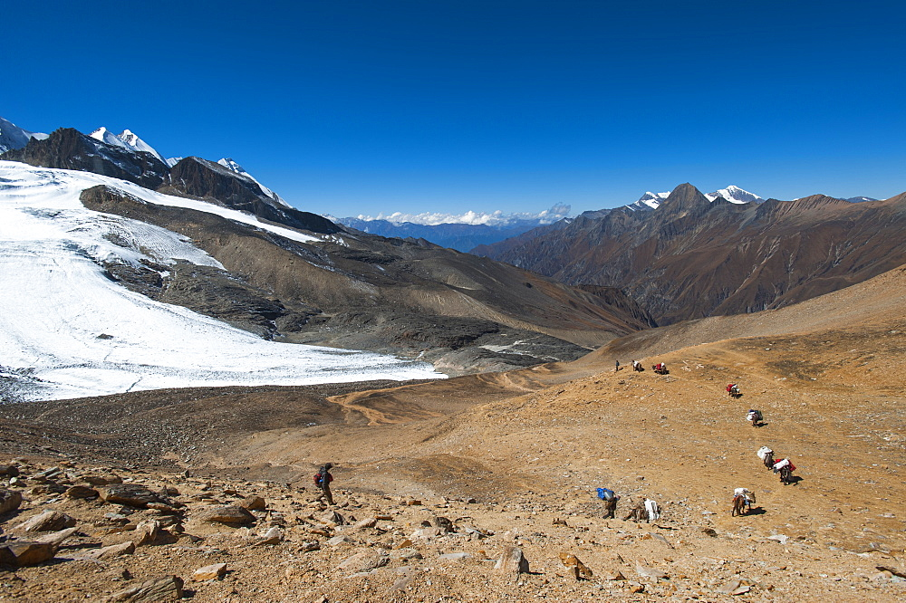 Mules and trekkers descend the Kagmara La, the highest point in the Kagmara valley at 5115m in Dolpa, a remote region of Nepal, Himalayas, Asia