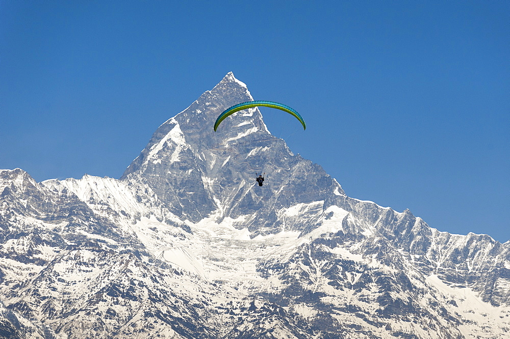 A paraglider hangs in the air with the dramatic peak of Machapuchare (Fishtail mountain) in the distance, Nepal, Himalayas, Asia