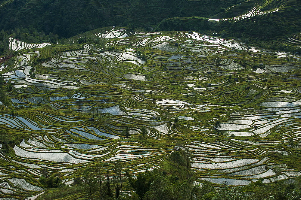 Fashioned over hundreds of years by the Hani, these terraces in Yunnan cover an area of roughly 12500 hectares, Yuanyang, Yunnan Province, China, Asia