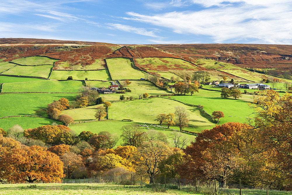 Autumn sunlight over green fields and deciduous woodland in Farndale, The North Yorkshire Moors, UK.